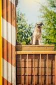 Curly brown dog jumping sitting at construction site — Stock Photo
