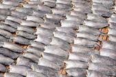 Dry fish — Stok fotoğraf