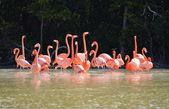 View of pink flamingos — Stock Photo