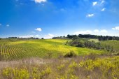 Italian rural landscape — Stock Photo