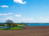 Agrarian landscape in northern Germany — Stock Photo