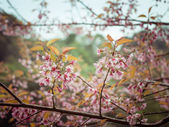 Pastel tones Spring Cherry blossoms sky with filter effect retro vintage style — Foto Stock