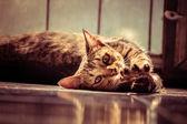 portrait cat with filter effect retro vintage style — Stok fotoğraf