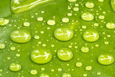 Water droplets on leaves — Stock Photo
