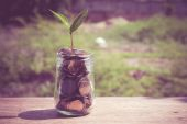 Plant growing out of coins with filter effect retro vintage styl — Stock Photo