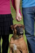 Couple Holding Hands with their Dog  — Stock Photo