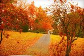 Vibrant Fall Foliage — Stock Photo