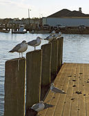 Seagulls perched on bulkheads in marina — Stock Photo
