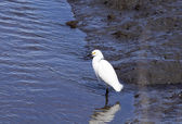 Egrets in Wildlife Refuge — Stock Photo