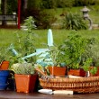 Assortment of Herbs in baskets and planters around Watering Can — Stockfoto #71815711