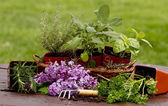 Herbs, Flowers, Planters and Gardening Tools — Foto Stock