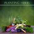 Planting herbs background — Stockfoto #72605557