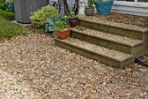 Pod Seeds from Maple Trees Covering Patio — Stock Photo