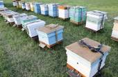 Bee hives in the apiary in the field — Stock Photo