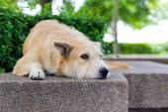Brown dog looking away — Stock Photo