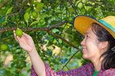 Female agriculturist hand holding fresh lemon — Stock Photo