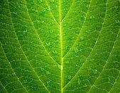 Leaf — Stock Photo