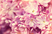 Beautiful gentle lilac flowers. floral background — Stock Photo