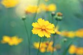 Bright yellow flowers in a fog — Stock Photo