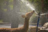 Elk Drinking Water - Stock Image — Stock Photo