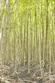 The forest mangrove. - Stock Image — Stock Photo