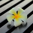 Stock Photo - A white plumeria on rustic wood floor — Stock Photo #72096619