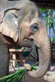 Stock Photo - Close-up elephant,Asian elephants — Stock Photo