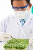 Scientist researching sprout — Stock Photo