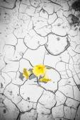 Blooming flowers in cracked dirt — Stock Photo