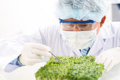 Scrutinizing look of a scientist at seedling — Stock Photo