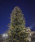 Inauguration of Christmas Tree — Stock Photo