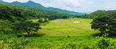 Panorama landscape of green rice farm field with mountain in tha — Stock Photo