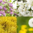 Collection of blossoms. Spring concept. — Stock Photo #72051415