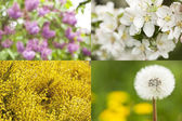 Collection of blossoms. Spring concept. — Stock Photo