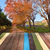 Wood table top on thai sakura blossom, Chiang Mai background mon — ストック写真