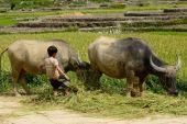 LAOCAI, VIETNAM, JUN 10: Unidentified kid and farmers in rice fi — Stock Photo