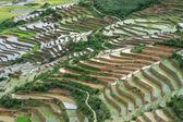 Most Beautiful Rice Terrace in Tule , Mu Cang Chai, Vietnam — Stock Photo