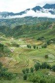 Terraced rice fields in Sapa, Lao Cai, Vietnam — Stock Photo