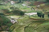 Reisterassen in Sapa, Lao Cai, Vietnam — Stockfoto