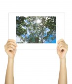 Hands holding big tree picture isolated on white — Stock Photo
