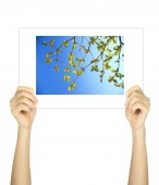 Hands holding leaf picture isolated on white — Stock Photo