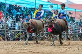 Participants buffalo racing festival run in 143th Buffalo Racing Chonburi 2014. — Stock Photo
