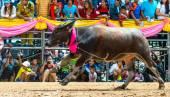 Buffalo racing festival runs in 143th Buffalo Racing Chonburi 2014. — Stock Photo