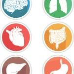 Human Body Organs Icon — Stock Vector #57456775