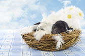 Puppy in the nest — Foto Stock