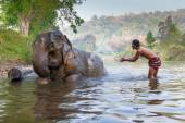 Unidentified man shows playing with an elephant in a river in Sangkhlaburi, Kanjanaburi, — Stock Photo