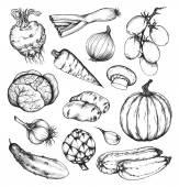 Свежие овощи органические природные набор — Cтоковый вектор