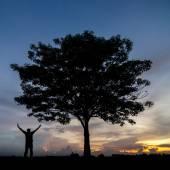 Silhouette des arbres et l'homme heureux. — Photo