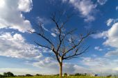 Dead trees under blue sky — Stock Photo