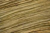 Textur des alten holzes — Stockfoto